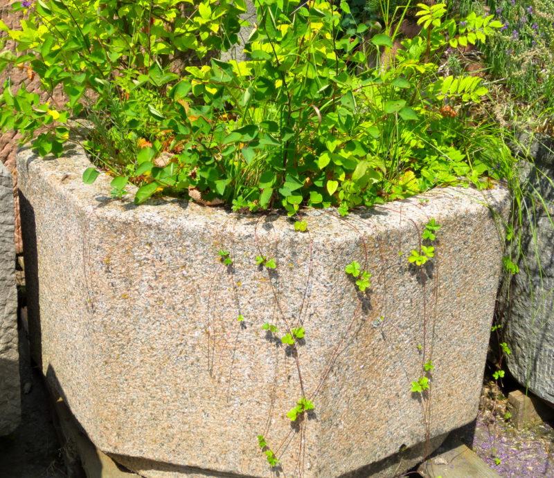 Pflanztrog aus Granit