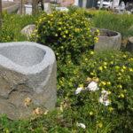 Brunnenfindling mit Naturkruste BWk003 (1)